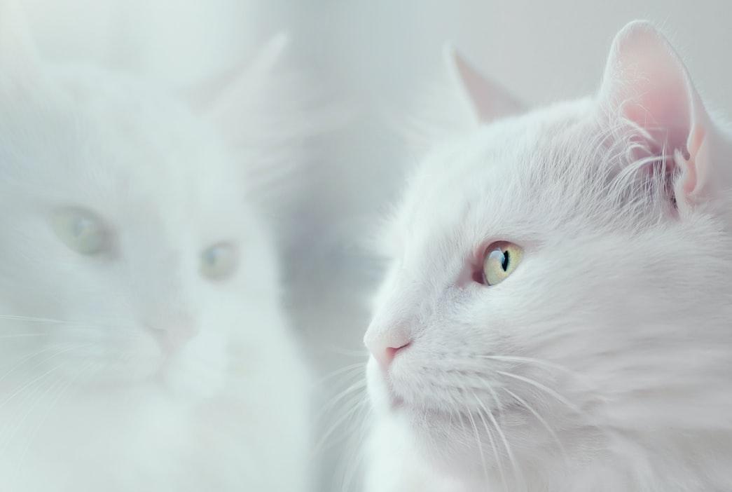 sexto sentido gatos