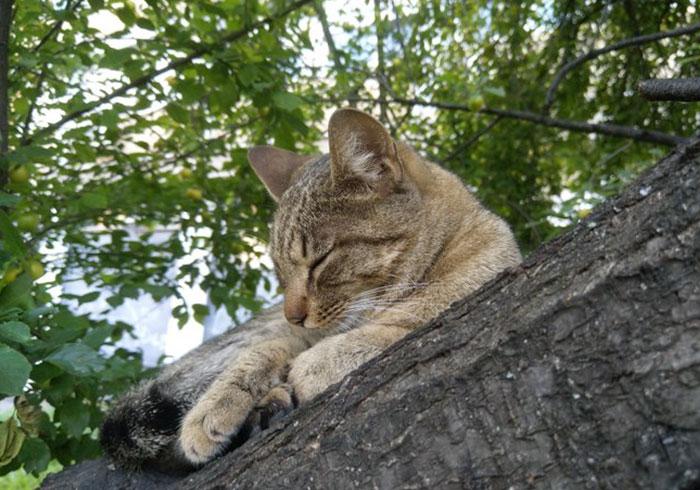 gatos amam árvores fofos