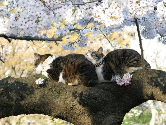 por que gatos gostam de árvores