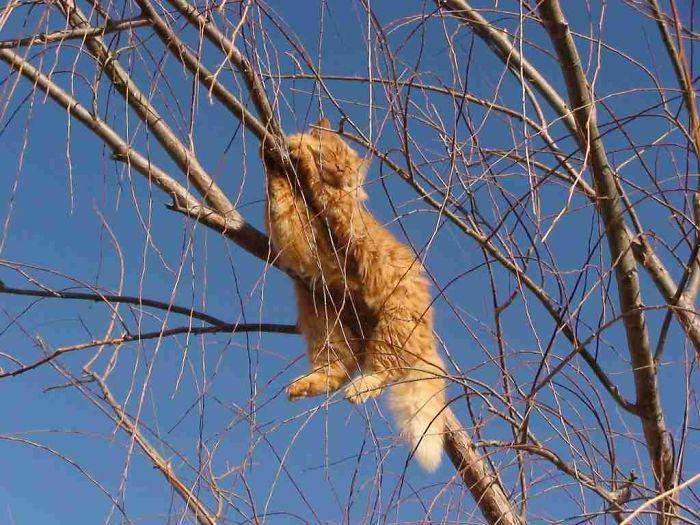 fotos de gatos dormindo em árvores