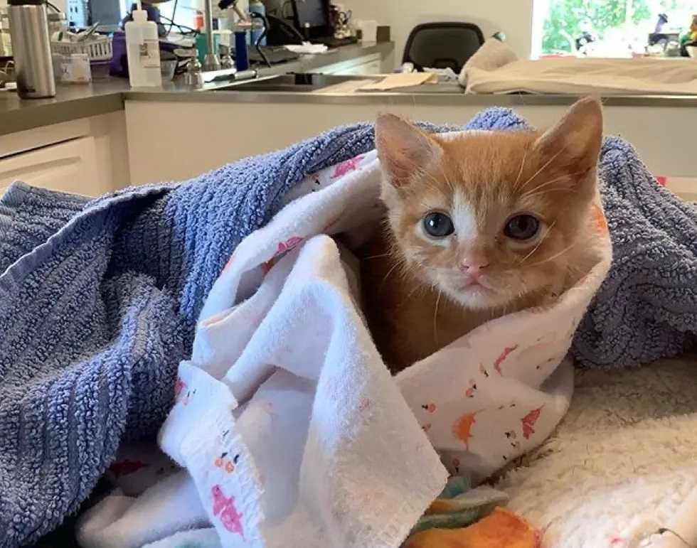 gatinho resgatado abrigo