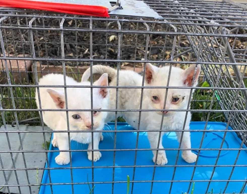 família descobriu gata de rua no quintal com filhotes
