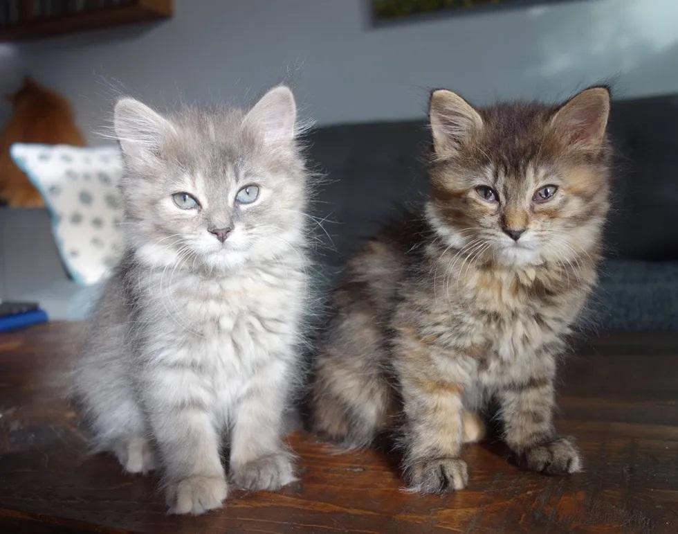 gatinhas irmãs inseparáveis