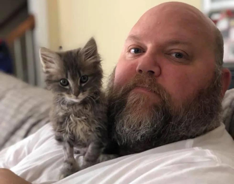 gatinho de rua resgatado