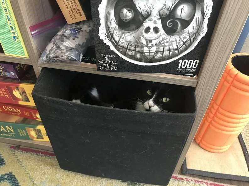 gatinha se esconde pela casa