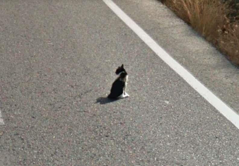 salvamento de gatinho