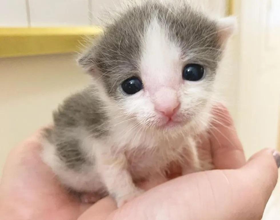 filhotes de gatos lindos