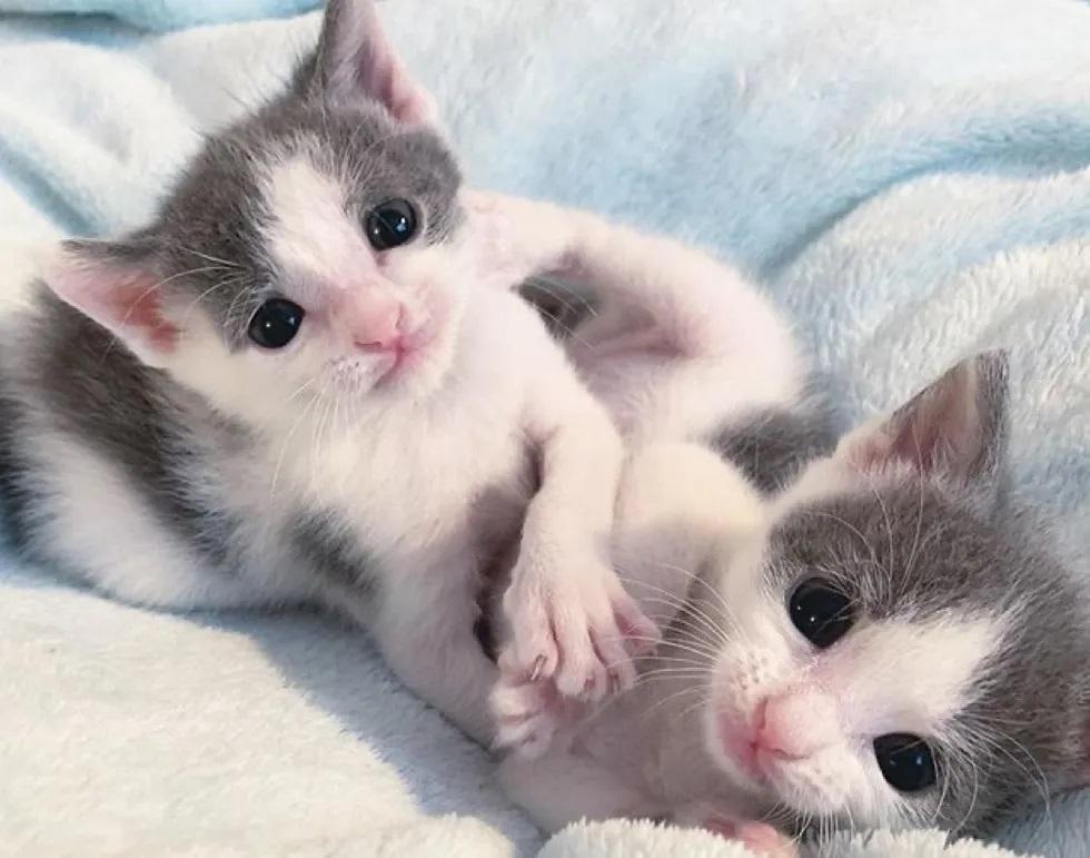 gatinhos gêmeos órfãos inseparáveis