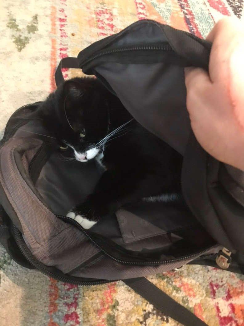 gatinha ama dormir em mochilas