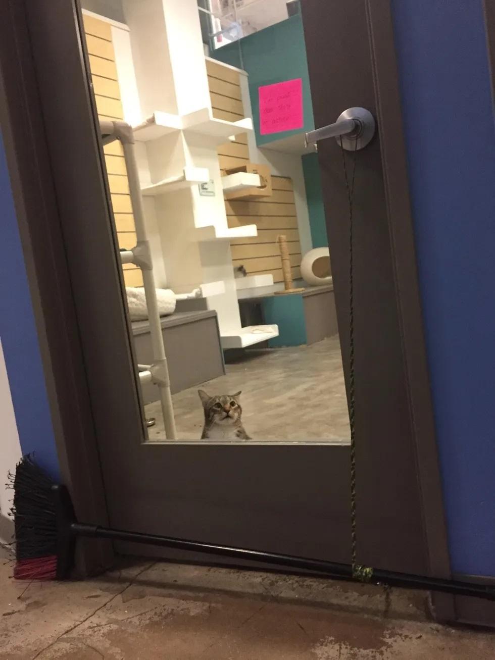 gatinho fugitivo