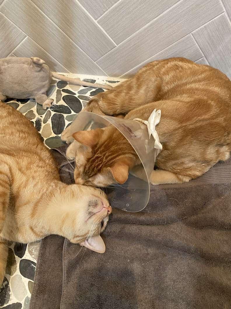 gatinhos gêmeos