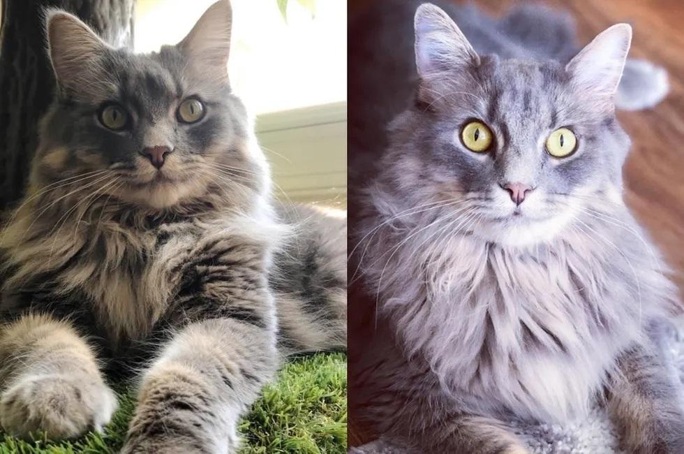 gatinho cresceu e ficou lindo