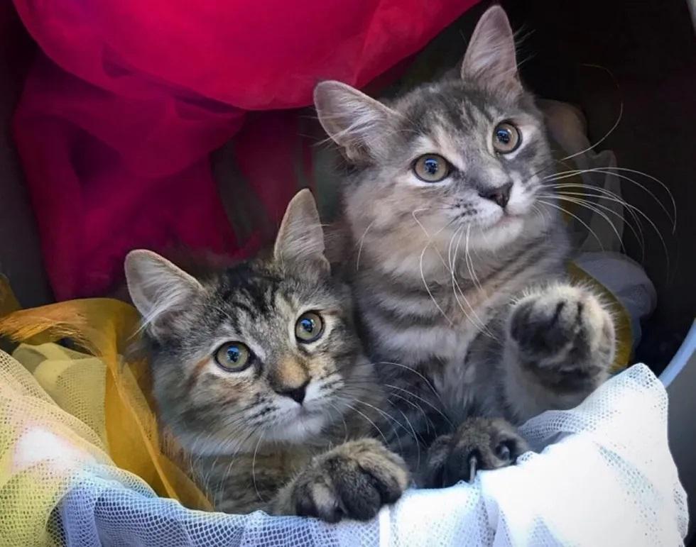 gatinhos de rua