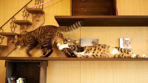 gatinhos dramáticos