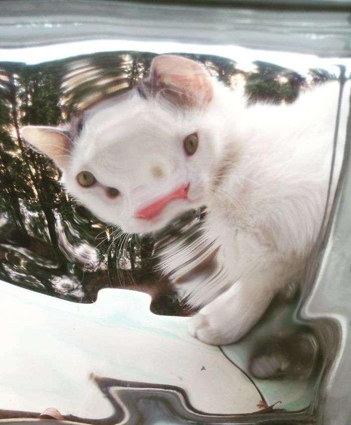 gatos divertidos fotos