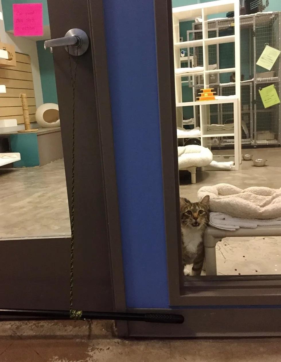 gato abre portas