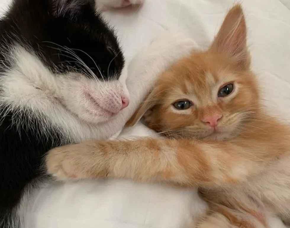 lindos gatinhos
