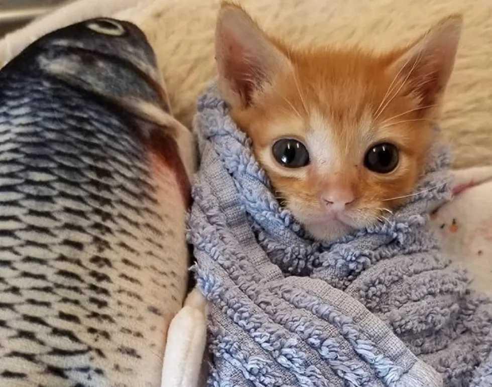 Gatos de abrigo são abraçados