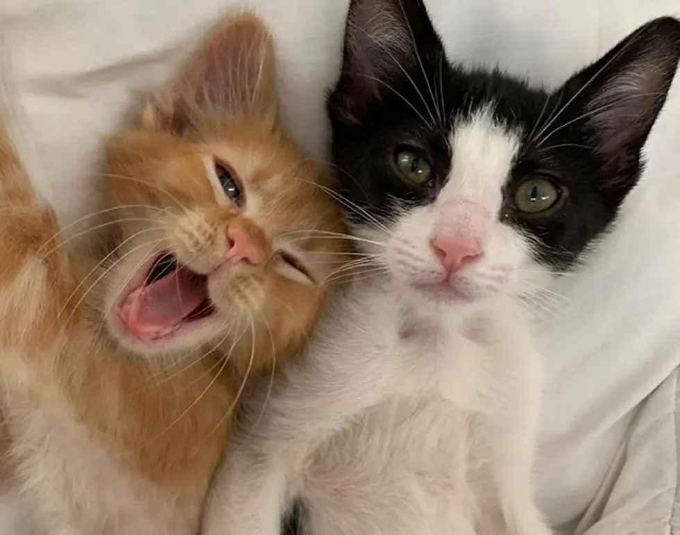 gatinhos amigos