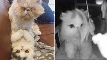 Câmera-captura-visitas-gatinhos
