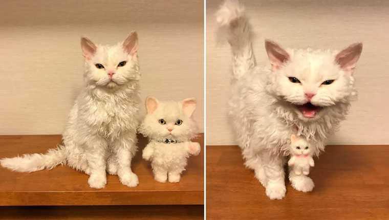 Conheça a gatinha japonesa