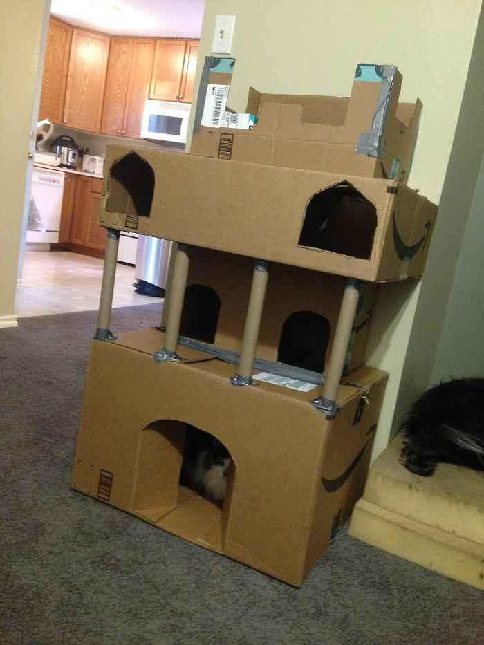Fortes de papelão gatinhos
