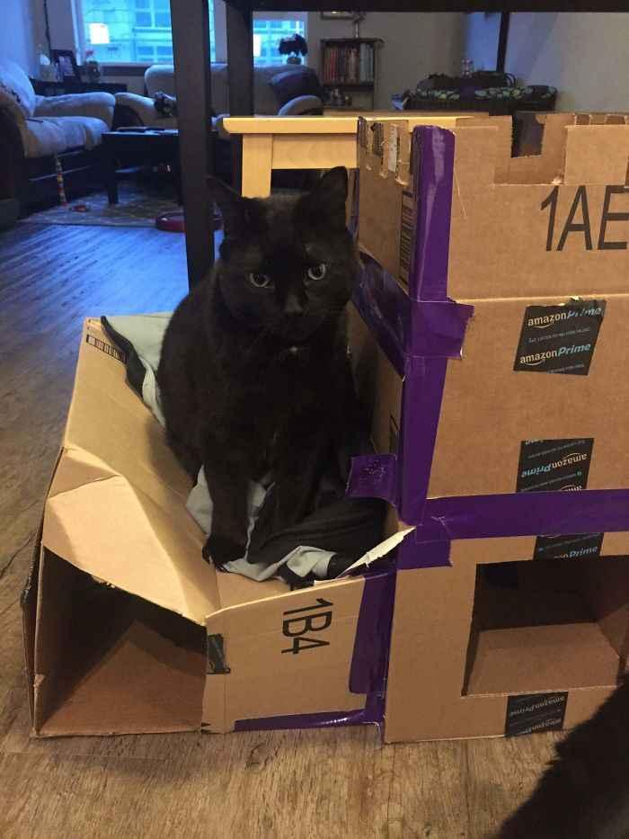 Fortes de papelão para gatinhos