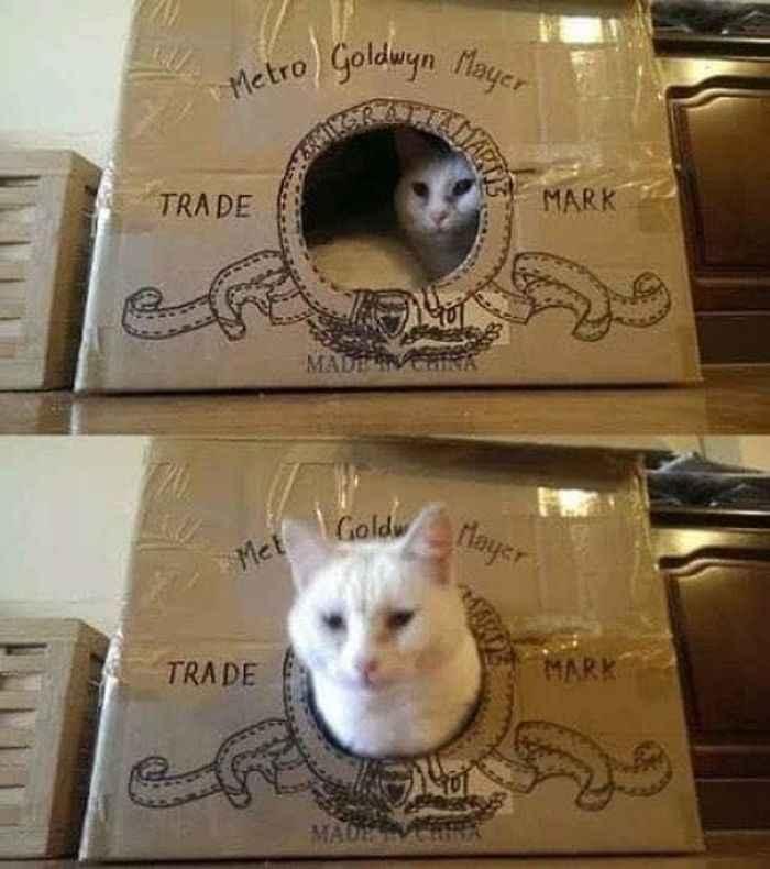 Fortes de papelão para gatos