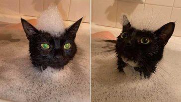 Gatinha apaixonada por banhos