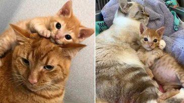 gatos de abrigo abraços gatinho