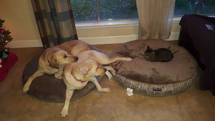 Gatinhos folgados cachorros