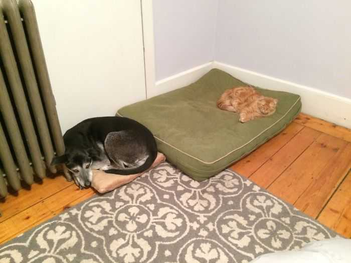 Gatinhos folgados camas