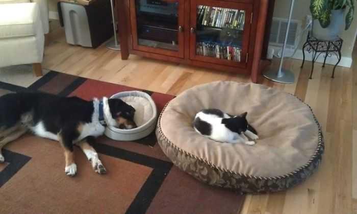Gatinhos folgados roubaram as camas