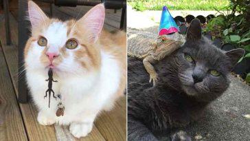 Gatos e lagartos