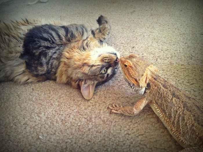 Gatos e lagartos amizade