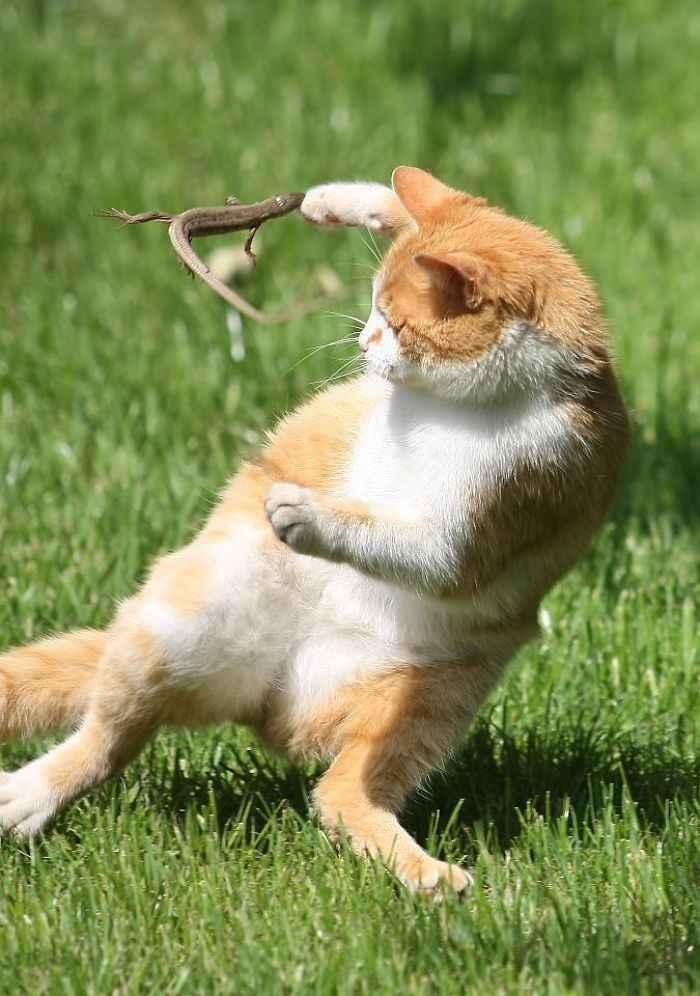 Gatos e lagartos engraçado