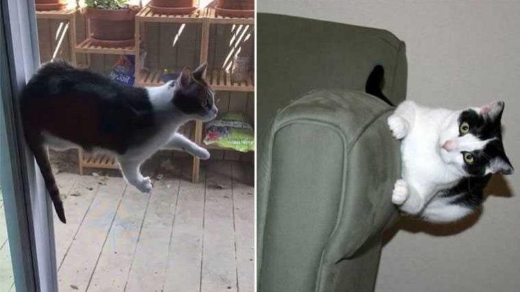 Gatos que desafiam as leis da física