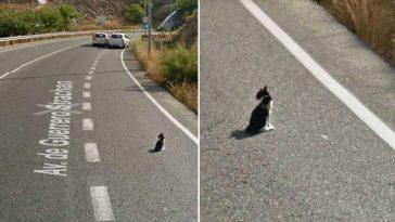 Google-Street-View-flagra-salvamento-de-gatinho