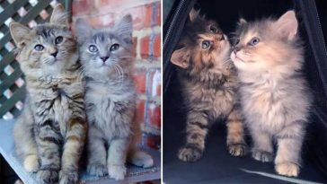 Irmãs-gatinhas-não-se-desgrudam