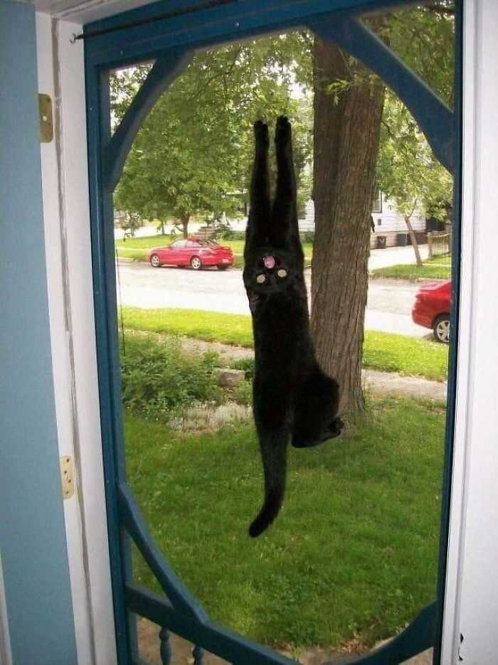 Morra de rir fotos gatinhos
