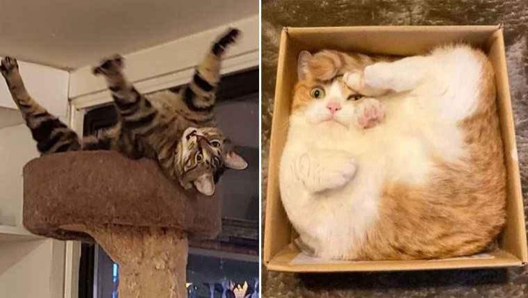 Morra de rir gatos
