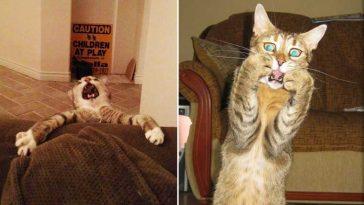Os-gatos-mais-engraçados