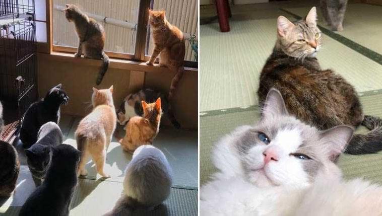 Pousada oferece gatinhos fofos