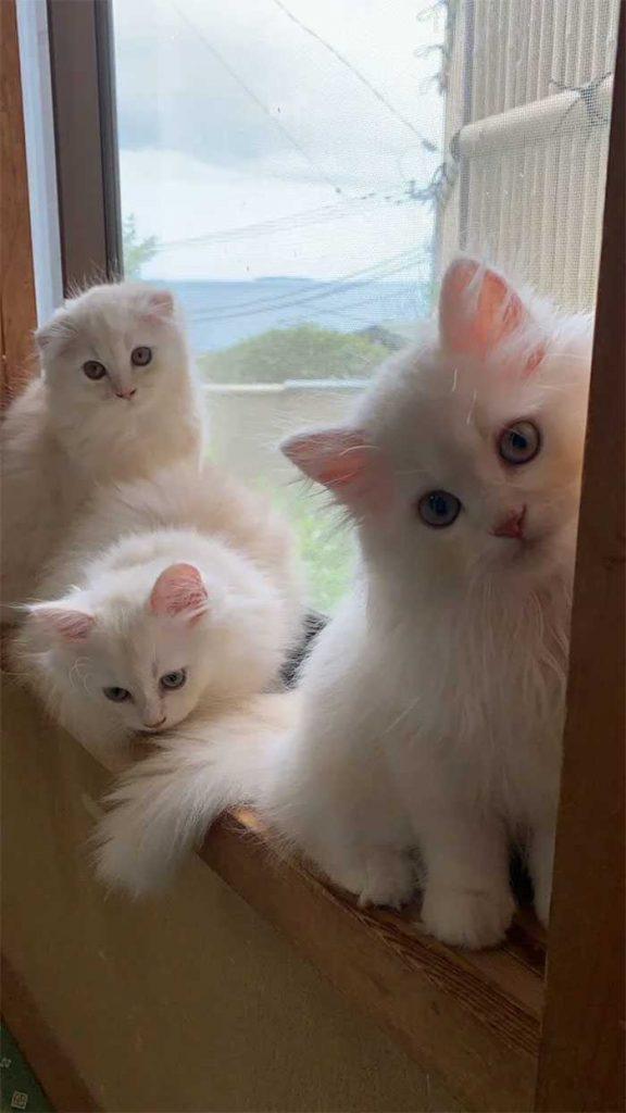 Pousada oferece gatinhos noite