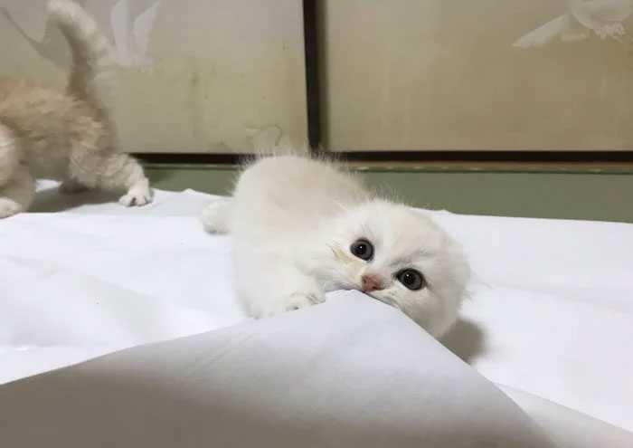 Pousada oferece gatinhos passar a noite