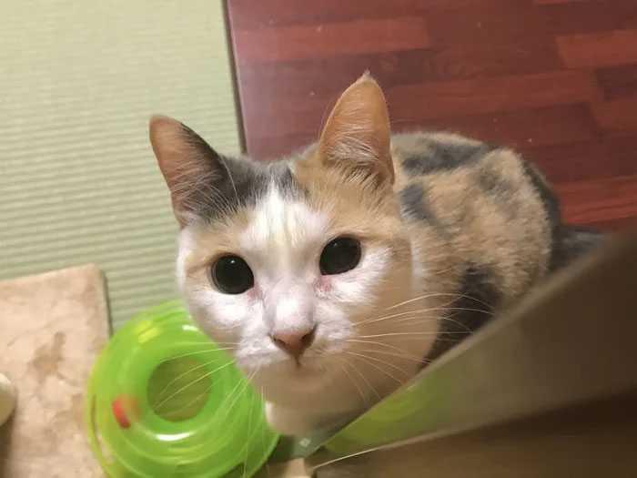 Pousada oferece gatinhos quem quiser