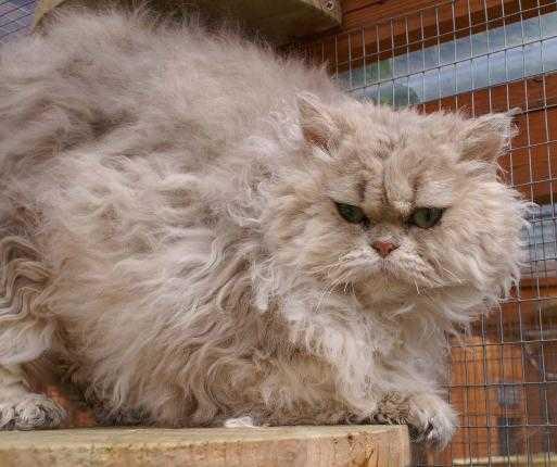 gatos mais novos do mundo