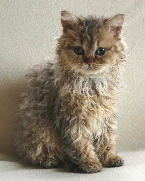 gatinhos mais lindos