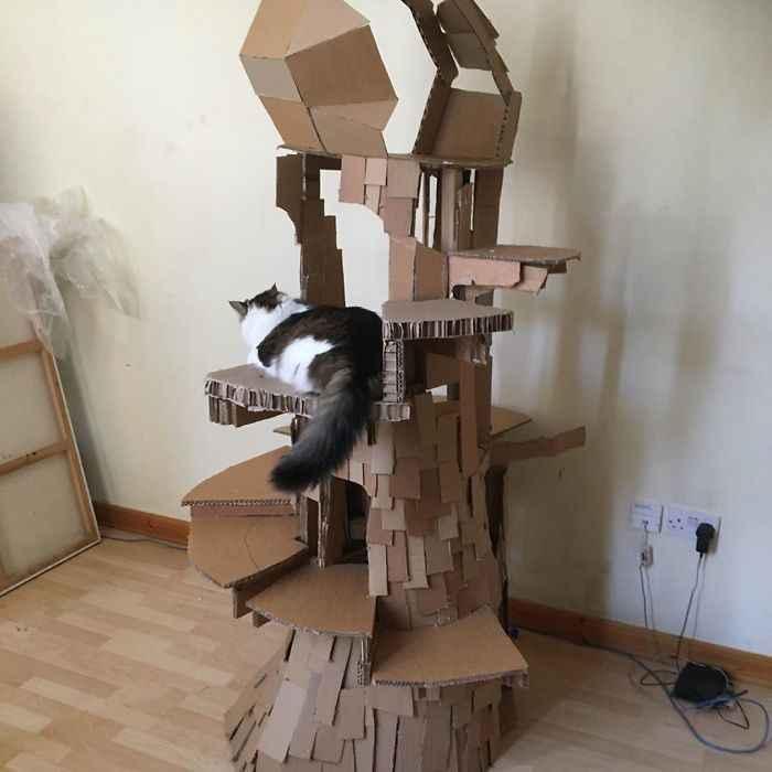 brincadeiras gatinhos