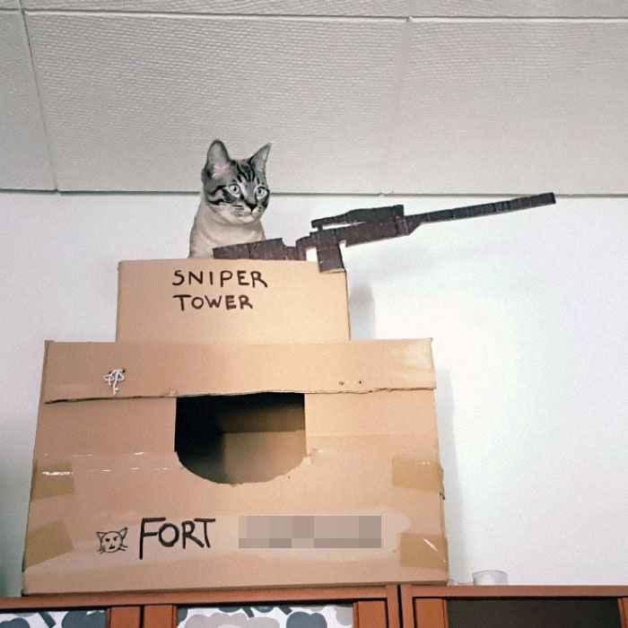 brincadeiras gatos